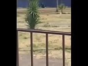 uno rikolino en el parque :v