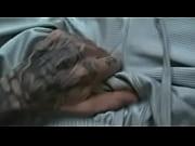 Sensuell massasje oslo anal escort
