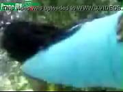 Randers escort glatbarberet fisse