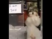 Perro bailando ajajjajajaaaj