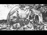 Rosasidan eskort sex film free