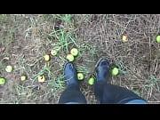 plums under preasure