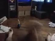 Bondage chair escort skellefteå