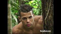 Gatos Brasileiros - Jungle Cruisers Thumbnail