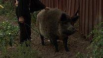 Orsay peed in farm 1