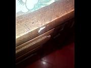 porno de bichos en la mesa de la cocina