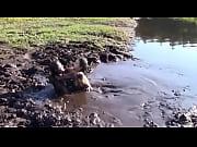 mud lovers leila hazlett trailer