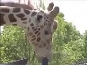 girafa safadinha,se lambuzando no ferro bem.