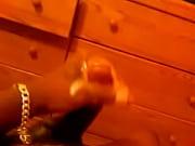 Adoos kvinnliga eskorter erotisk dans