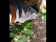 Talcher odia gay masti in forest
