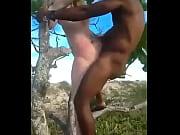 sexo en el arbol