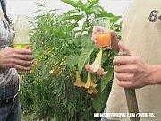 Gardener Sexual Interruption Outdoors Thumbnail