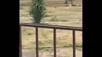 Uno rikolino en el parque :v pornhub video