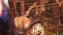 Chelsie Rae Is Animal (Penisillo.com)