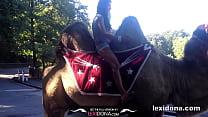 Lexidona - Camel