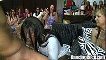 Dancingcock Pussating Cock Dancing