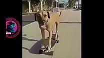 Cachorr Atilde O Botando Pra Fuder No Skate Ao Som Bugado De Charlie Brown Jr