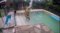 Magaly moviendo el culo en la piscina. Teen in the pool Vorschaubild