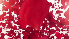 Antonia Sainz - Legs Wide Open - XCZ ...
