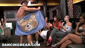 DANCING BEAR - A Wild...