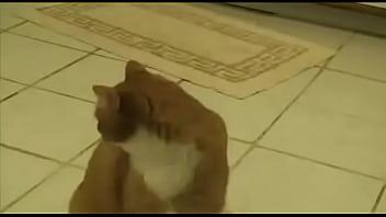 Gato xd