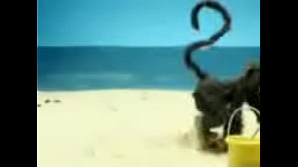 Hot Monkey