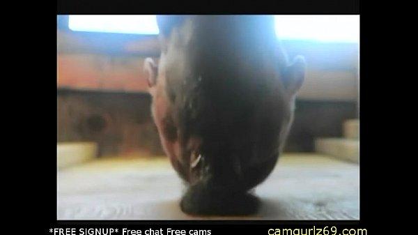 Amateur cumshot comp cams4 free adult web cams